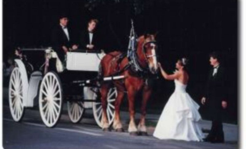 Horse and Carriage rentals North Central Florida